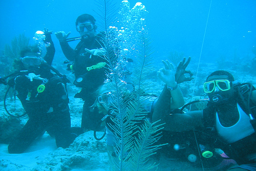 Scuba Diving Lessons in Sharm el Sheikh Egypt