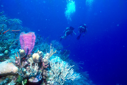 Best Places to Go Diving in Egypt