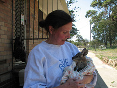 AUSTRALIA: Wildlife Rehabilitation - Multiple Projects and Hands-On Work!