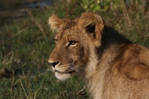 Volunteer with Animals in South Africa