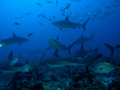Caribbean Scuba Diving Vacations
