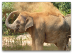 Thailand Elephant Volunteer Holidays