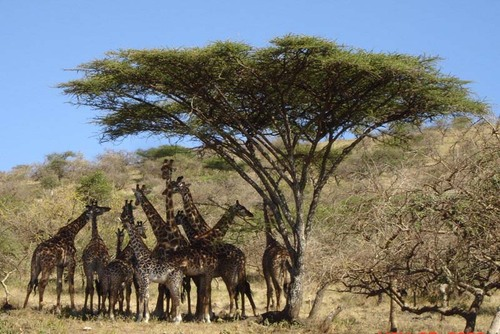 Best Safari Destinations in Tanzania