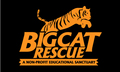 Big Cat Sanctuary Internship, Tampa, Florida
