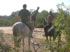 Hanchi Conservation Project - Horseback Conservation in South Africa