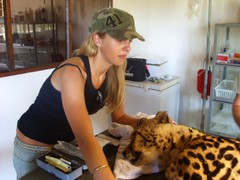 Shimongwe Wildlife Veterinary Experience - South Africa