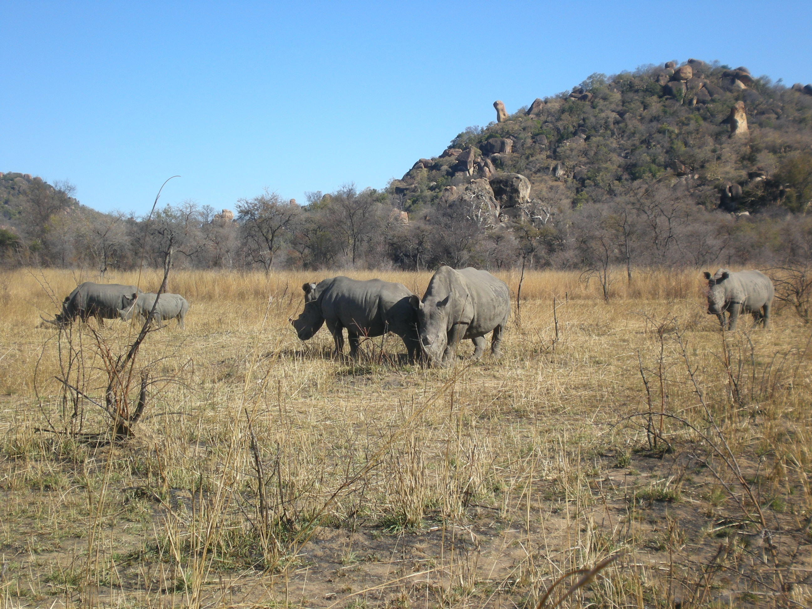 Rhino Trekking in Zimbabwe: An Incredible Experience