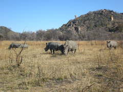 Top Reasons to Go Rhino Trekking in Zimbabwe