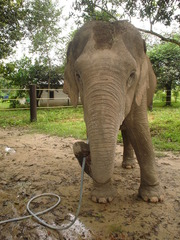 What to expect when volunteering with Elephants