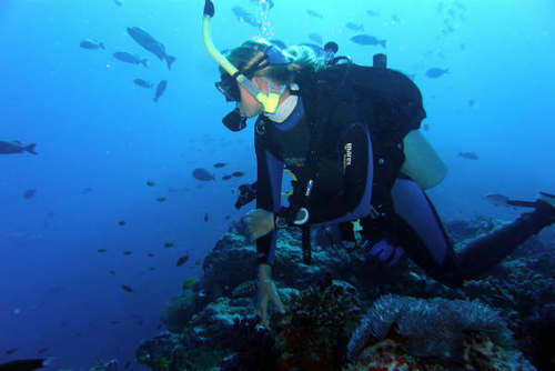 Marine Conservation Volunteering Abroad