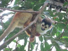 Costa Rica Big Cats, Primates & Turtle Conservation Project