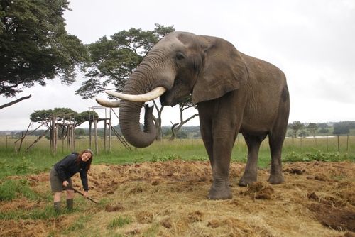 Volunteer with Elephants in Zimbabwe