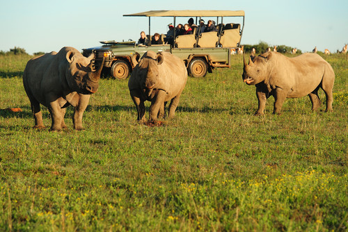 Volunteer with Rhinos in Africa