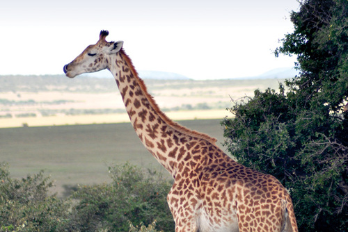 Cheap Wildlife Safaris in Tanzania