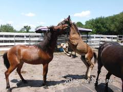 Wild Horse Mustang Rescue