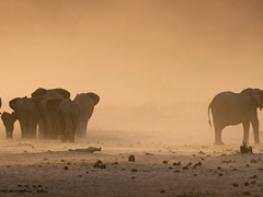 Elephant & Big 5 Wildlife Conservation