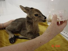 Wildlife Research and Small Mammal Care