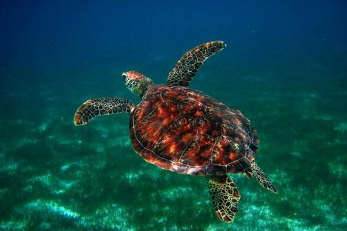 Volunteer with Sea Turtles in the Maldives