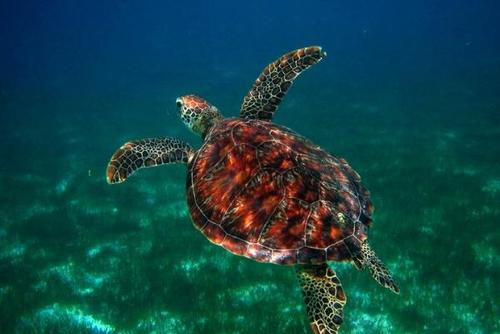 Sea Turtle Conservation Projects in the Maldives