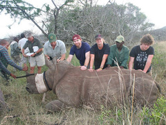 South Africa, Wildlife and Game Reserve Conservation Expedition in KZN
