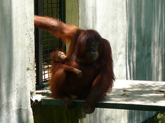 Malaysia, Care for Animals in Lok Kawi Park in Borneo