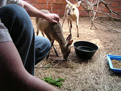 South Africa, Wildlife Rescue, rehabilitation and animal care in KZN