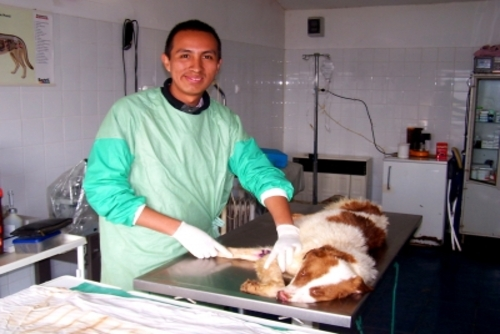 Veterinary Internships Abroad