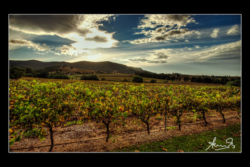 Top Tips for Touring the Hunter Valley Wine Region, Australia