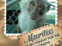 How You Can Help Wild Monkeys in Mauritius