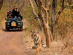 Best Wildlife Destinations to Visit during Monsoon in India