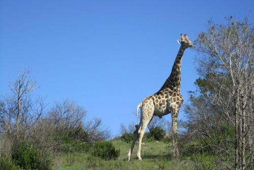 South Africa Wildlife Adventure