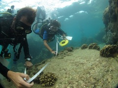 Thailand Coral Reef Conservation and Diving