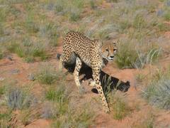 Namibia Wildlife Conservation & Sanctuary