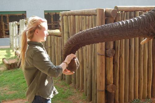 South Africa Wildlife Conservation Volunteering