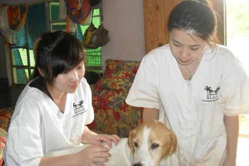 Veterinary Medicine Placements in Tobago