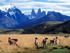 Torres del Paine Tour From El Calafate