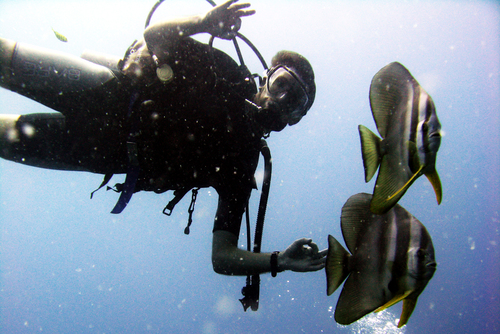 Scuba Diving Courses, Packages & Holidays