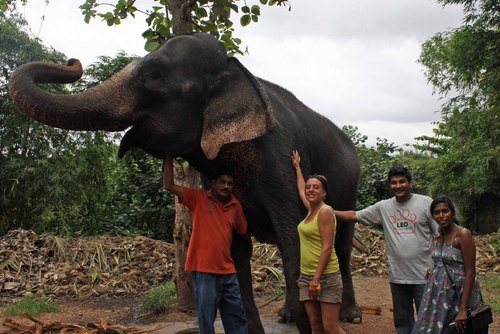 Volunteer with Elephants Abroad