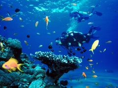 Amazing Scuba Diving Promotions for 2015