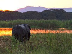 Safari Adventure in Malawi
