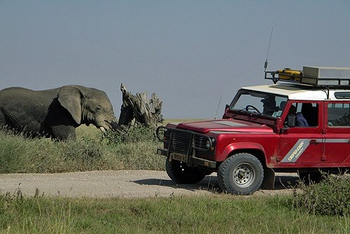 5 Best Things About Booking a Safari with Africa Expedition Support