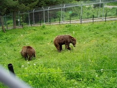 Volunteer at Wild Bears Conservation Park in Bulgaria