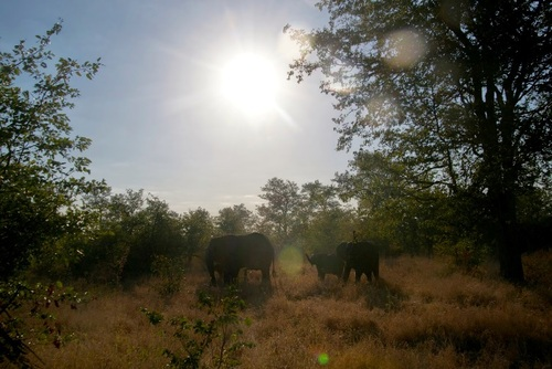 Kruger National Park Self-drive Safari Tips