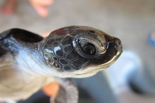Malaysia Turtle Conservation