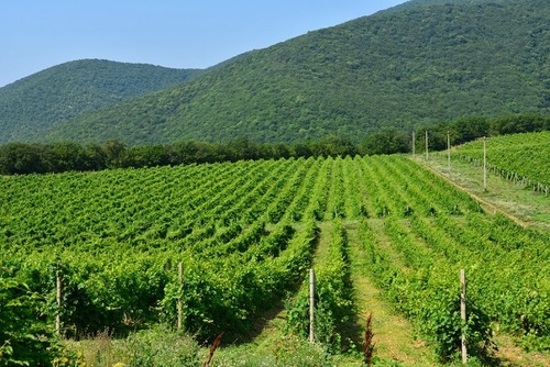 Wine Tour - Wine Making Traditions of Southern Russia