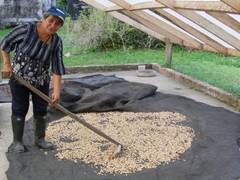 Coffee Farm Voluntary Work in in La Mesa, Colombia
