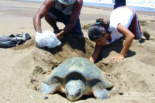 Sea Turtle Internship, Costa Rica