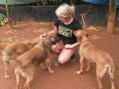 Animal Care Volunteer Programs in the Caribbean