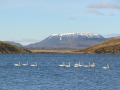 Go North My Friends - To Lake Myvatn, Iceland!
