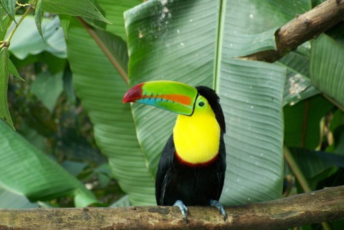 Central America Wildlife Tours